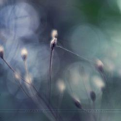 Laterns (Flower power)