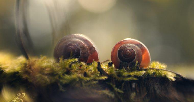Tiny ones