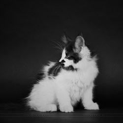 Kittens127 (The fluffy ones)