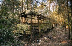 Full report Jungle Bus